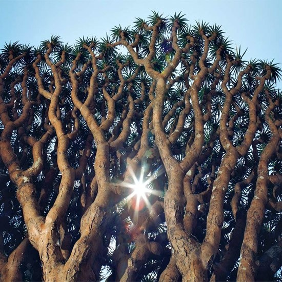 Yemen's Socotra Island: In the Land of the Dragon's Blood Tree : Condé Nast Traveler