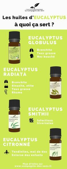 En plus d'être la nourriture quasi exclusive des koalas (et entre nous tout le monde aime les koalas), l'Eucalyptus est aussi utilisée dans de nombreux produits pharmaceutiques ! Découvrez les différentes propriétés bienfaitrices des huiles essentielles d'Eucalyptus ! #huilesessentielles #eucalyptus La Compagnie des Sens Pictogrammes : www.thenounproject.com