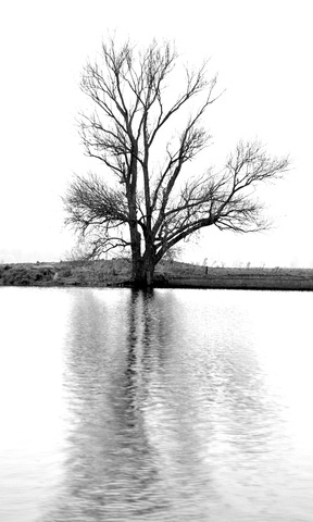 Nature in Werkendam, Netherlands (lonely tree) - a photo by grannychristina