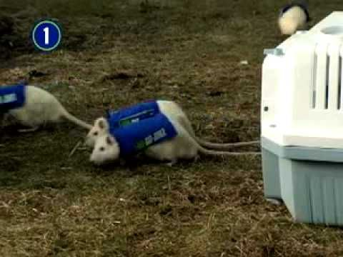 1-800-Got-Junk? Rats2