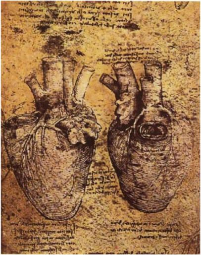 leonard de vinci anatomie - Recherche Google