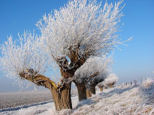 Noord-Beveland | knotwilgen frozen fog on willows | www.ruiterplaat.nl