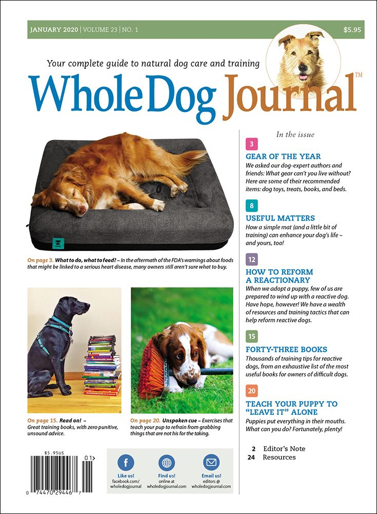 Download The Full January 2020 Issue Dogs Sick Dog Dog Care