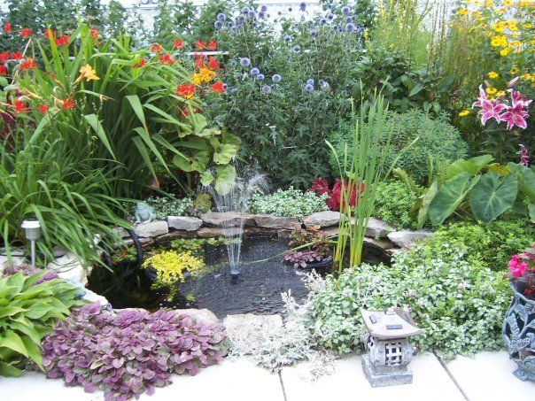 Images of water plants pond photos pond fish for Pond with plants