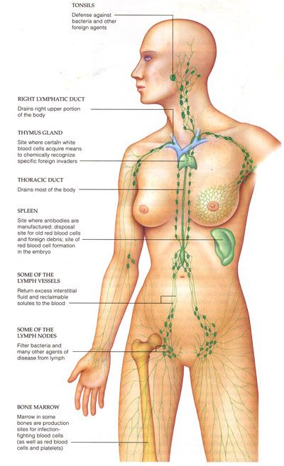 Manual Lymph Drainage - Mobile Massage Service - Durban