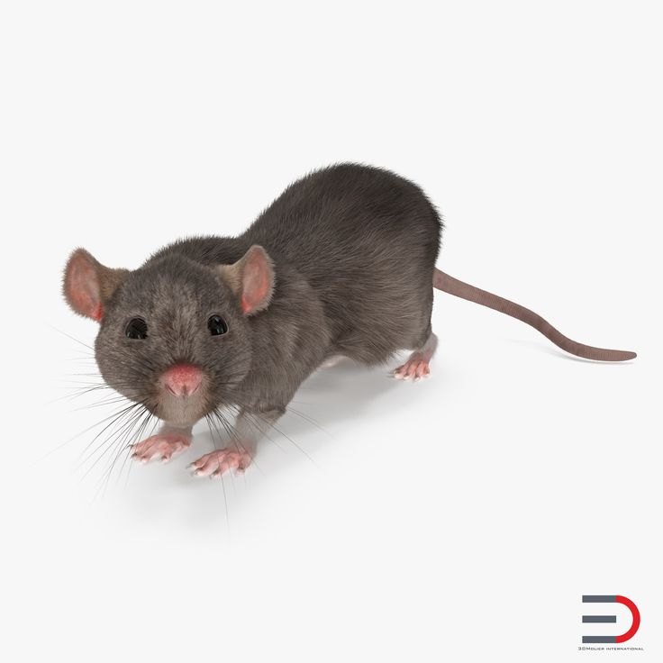 3D Rat Rigged