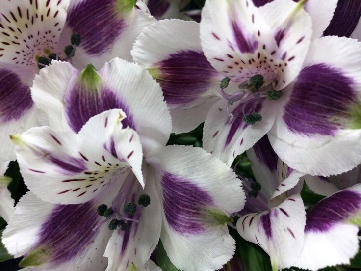 purple alstroemeria wedding bouquet - Google Search