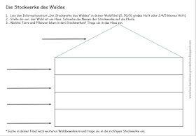 Teach & Share - Grundschule: Die Stockwerke des Waldes Teil II