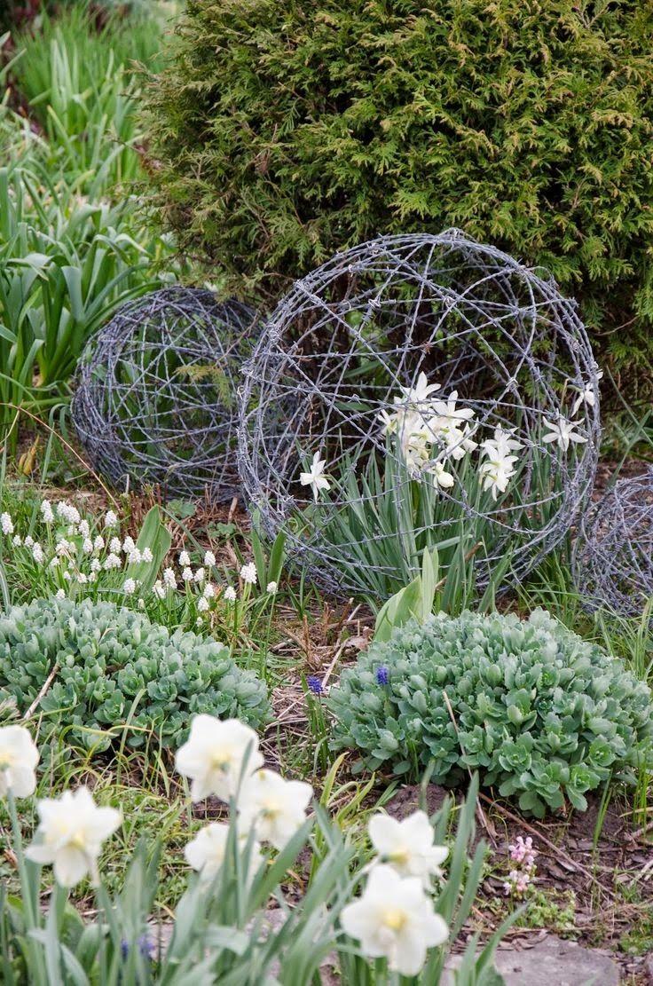wilgen ballen waar tulpen doorgroeien!