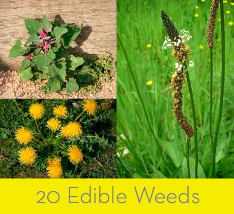20 Edible Weeds. Instead of battling weeds this growing season, how about eating them?