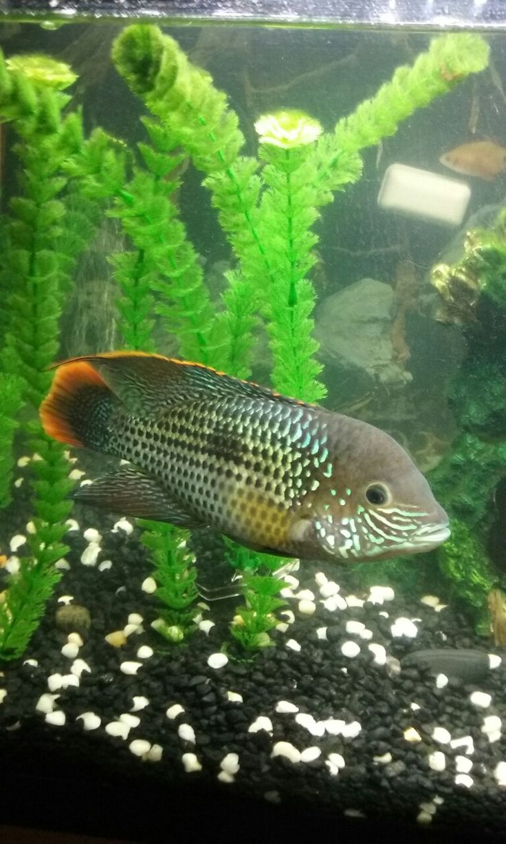 Fish aquarium online delhi - Tanks Fish