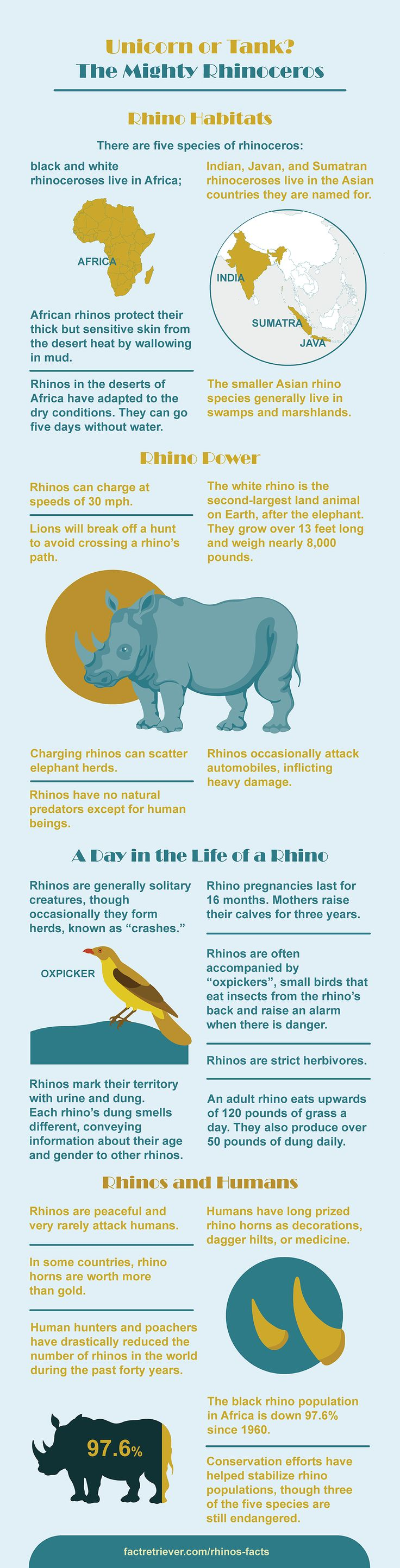 All the most interesting rhino facts in one amazing infographic.