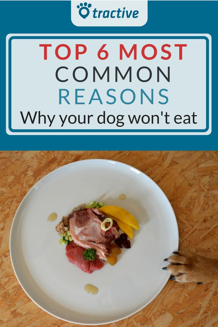 80 Besten Dog Blog Bilder Auf Pinterest Gro E Hunde