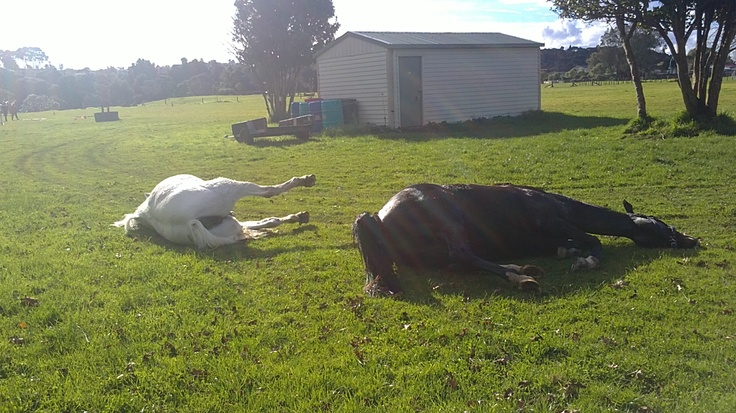 suzie and lizzie rolling after their bath