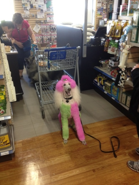Isis was on her way to Woofstock but not before stopping in our Oakville store!
