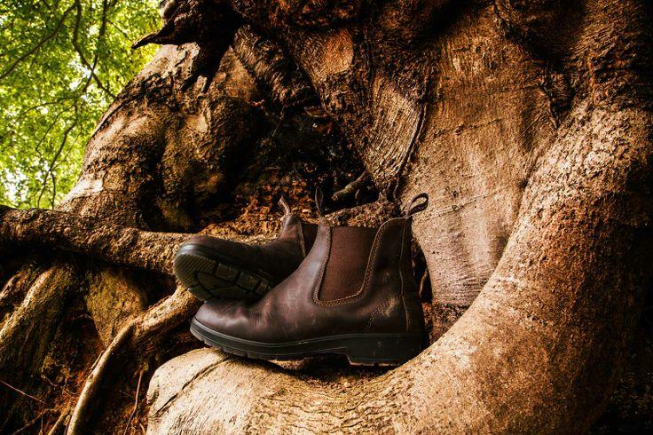Skovtur med Blue Heeler boots... Go walkabout...