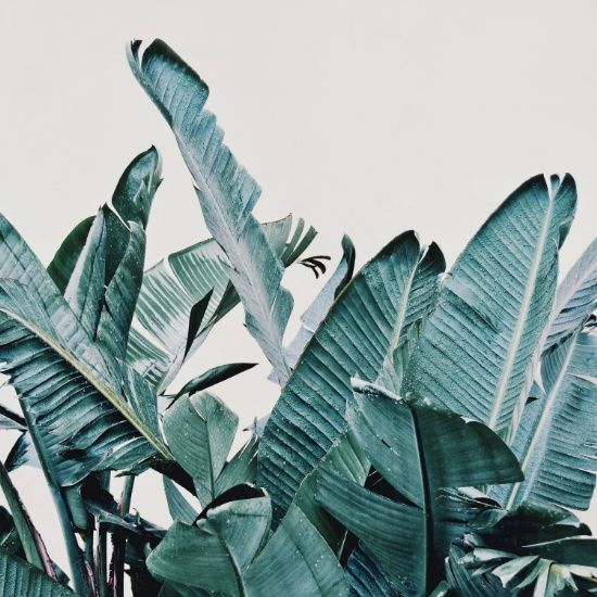 Banana leaf Art print, urban jungle trend, botanic trend, plant trend, modern wall art, contemporary art print, tropical art, poster, art