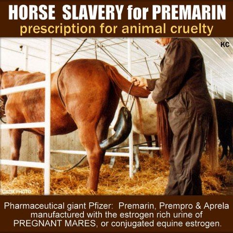 """Every year 75,000 mares are impregnated and put in stalls unable to turn around, take even a few steps, or comfortably lie down. Rubber sacks−which can cause sores−are strapped around the mares' groins so that their urine can be collected to make Premarin. The mares are denied free access to water so their urine will yield a more concentrated estrogen. The foals resulting from these pregnancies are considered """"throwaways,"""" and most are shipped off to slaughter. This is cruelty and it must…"""