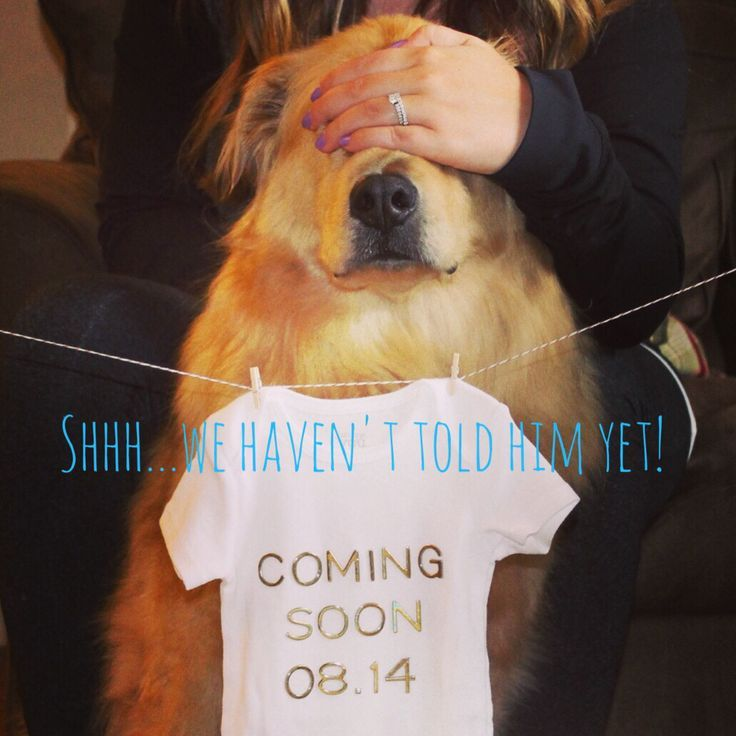 Well? How are you planning to break the pregnancy news to the dog? http://thestir.cafemom.com/pregnancy/185707/16_fun_ways_to_include