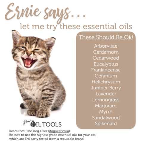 essential oils for cats essential oils for the home pinterest essentials oil and doterra. Black Bedroom Furniture Sets. Home Design Ideas