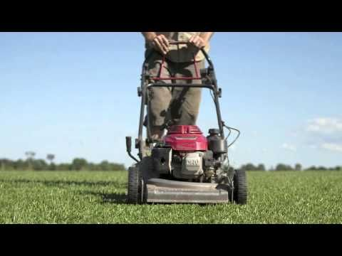 Learn how to get the most out of your Lilydale Instant Lawn this spring!