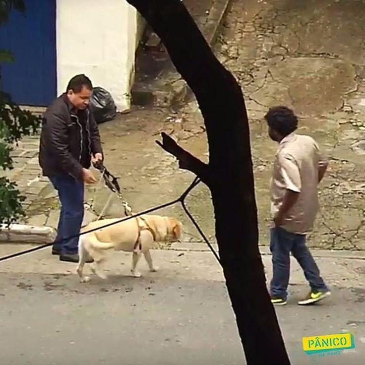 O Zé vai apavorar quem descumprir a Lei Federal sobre o direito do cego transportar seu cão-guia em táxis e aplicativos. Lei é lei, p#$rra!