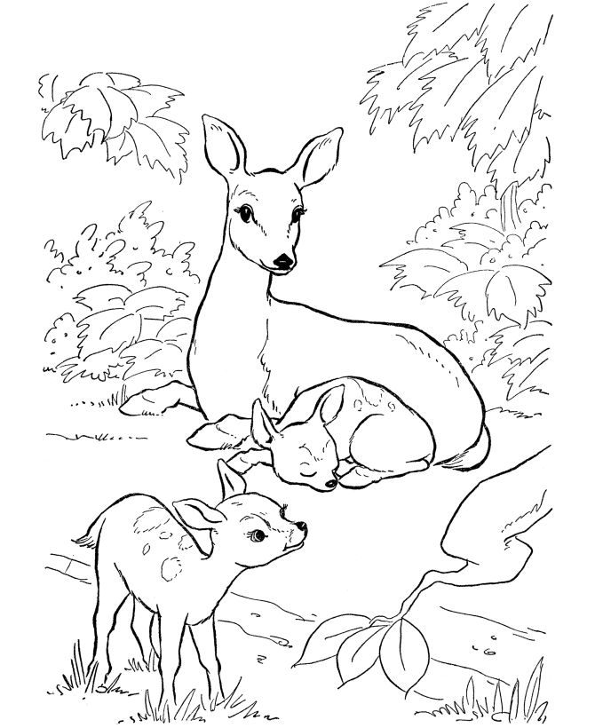 Deer Coloring Page   Wild Animal Doe and Fawn Coloring Pages and Kids Activity sheet   HonkingDonkey