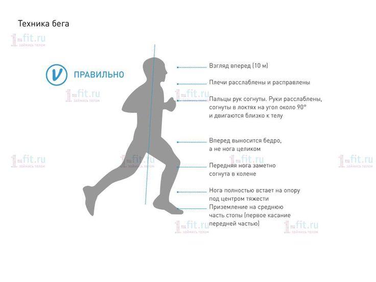 техника бега меняется в зависимости как минимум от трех факторов: скорости, длины дистанции и уровня подготовки бегуна