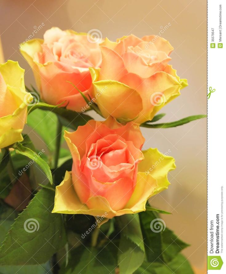 A beautiful bunch of roses