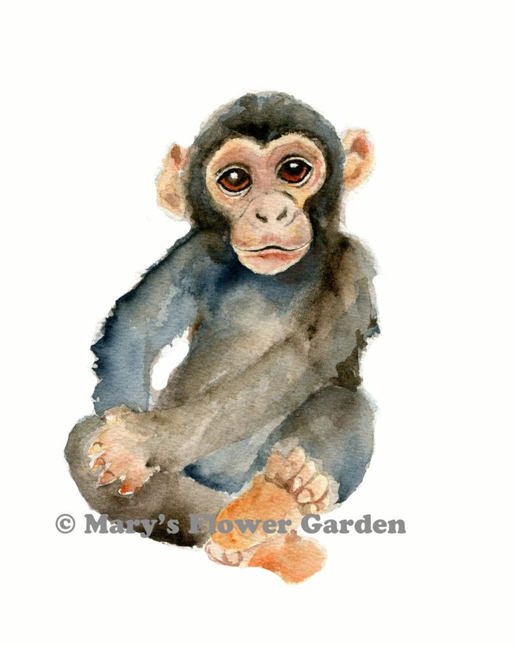 Chimpanzee watercolor print, chimpanzee art, nursery art, boys room decor, jungle animal painting, boys nursery prints, by Marysflowergarden on Etsy https://www.etsy.com/listing/237483987/chimpanzee-watercolor-print-chimpanzee