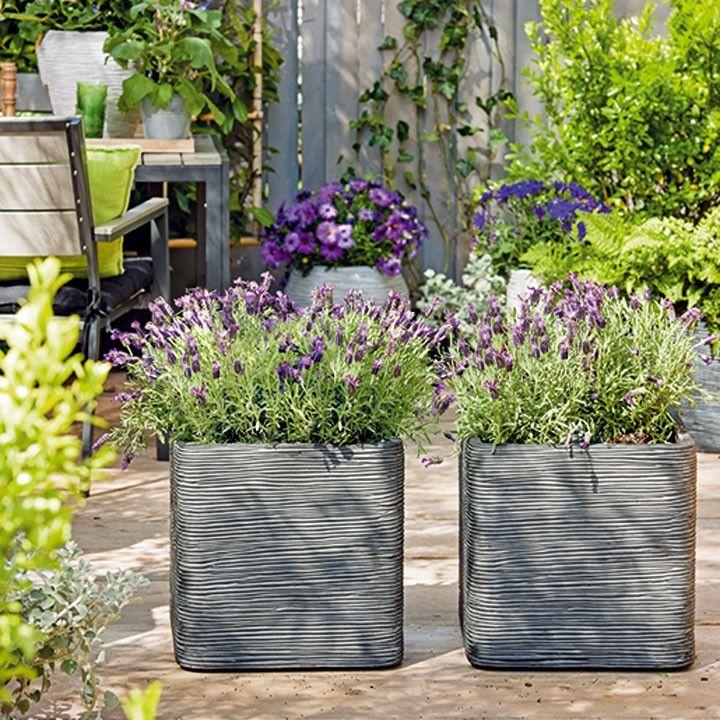 Lavendel in mooie grote potten #tuin #planten #lavendel #balkon #intratuin