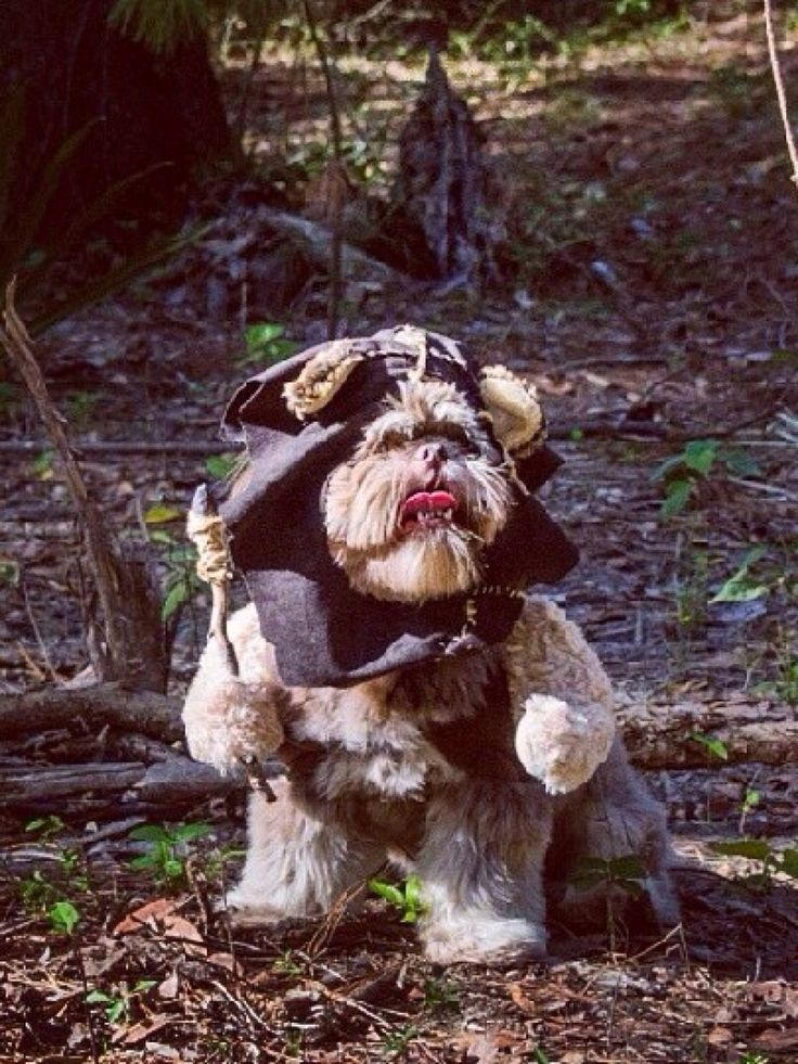 Chewbacca Dog Halloween Costume