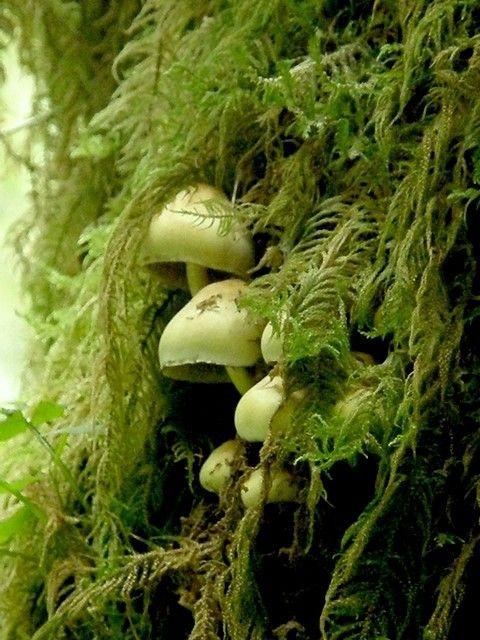 mossy, mushrooms