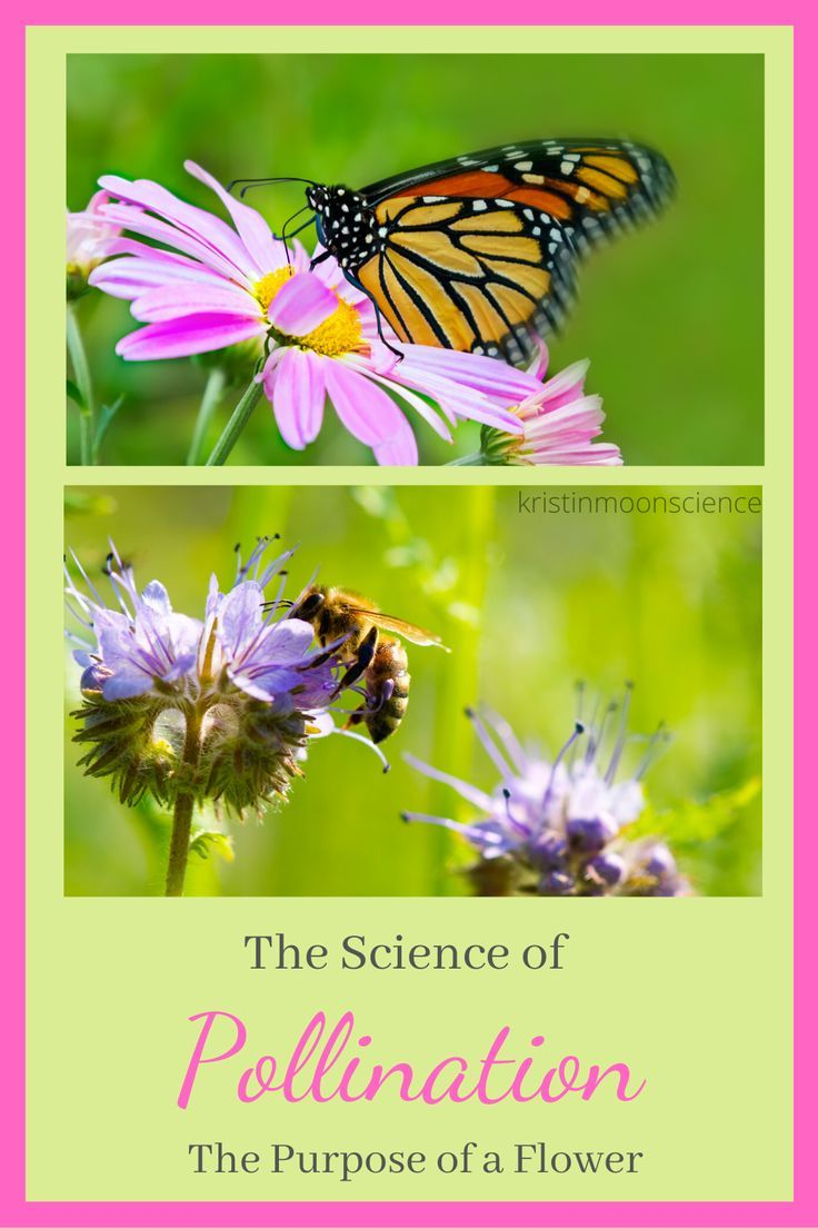 The Purpose Of A Flower The Science Of Pollination Kristin Moon Science Pollination Moon Science Cool Science Experiments