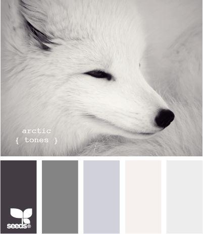 arctic tones - Opening