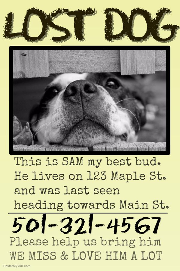Best Lost Pet And Pet Adoption Flyers Images On   Lost