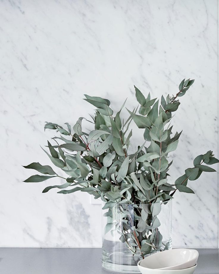 The classic Carrara marble slab splashback toning perfectly with the matte sleek concrete benchtops & beautiful eucalyptus foliage in the kitchen of our Neutral Bay project. * * * #rhysjonesia #kitchendesign #kitchen #classickitchen #marble #carraramarble #splashback #cdkstone #caesarstone #eucalyptus #interiordesign #interiorstyling @caesarstoneau @cdkstone @centralcoastgranite { @suestubbs_ }
