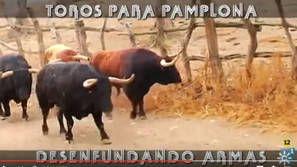 Así 'entrenan' los toros de Núñez del Cuvillo para el encierro del miércoles día 13.