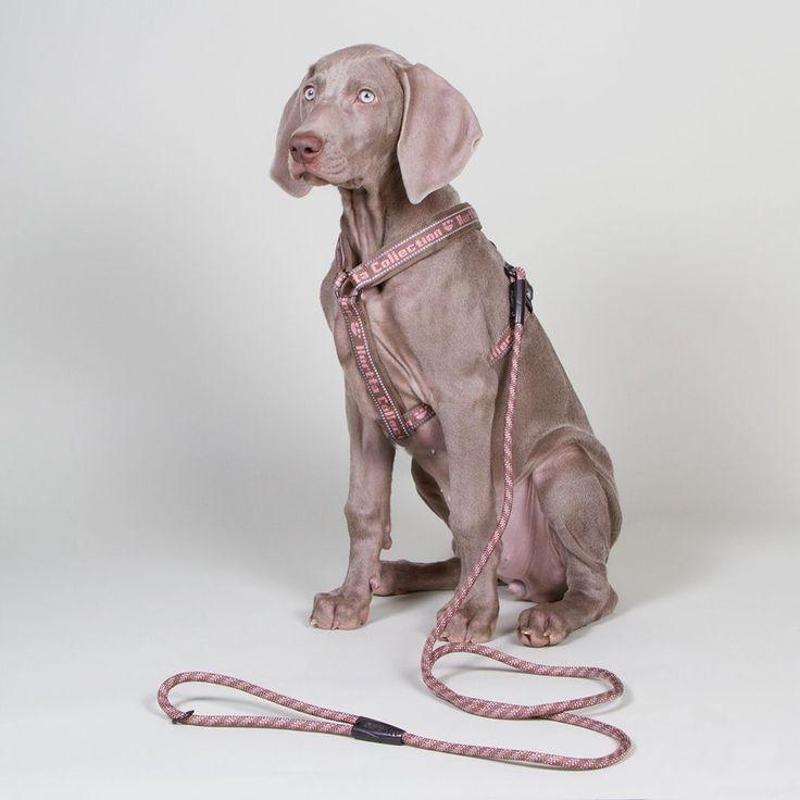 Dogmania - Lite roligare hundträning - Hurtta Outdoors Pup Vadderad Y-sele Rose
