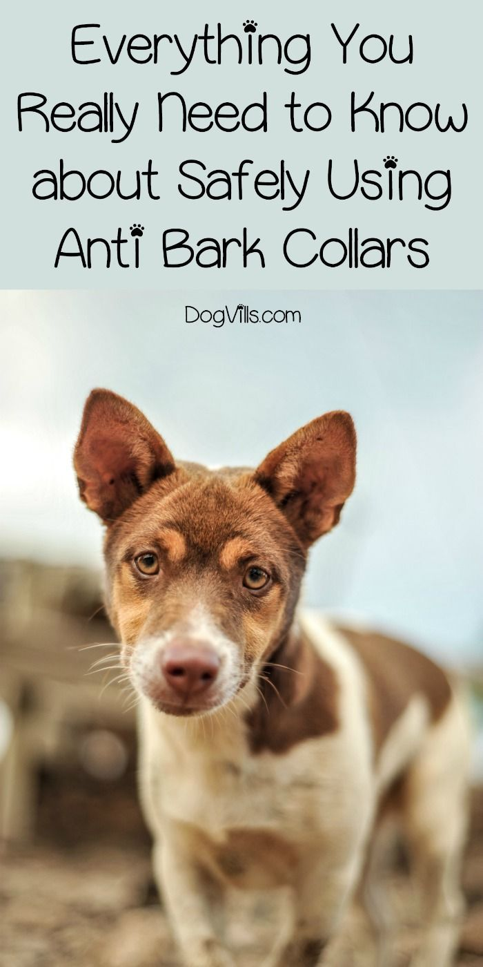 Anti-bark collars come in three varieties - shock, ultrasonic, and citronella. Find out if, when and how you should use these types of collars!