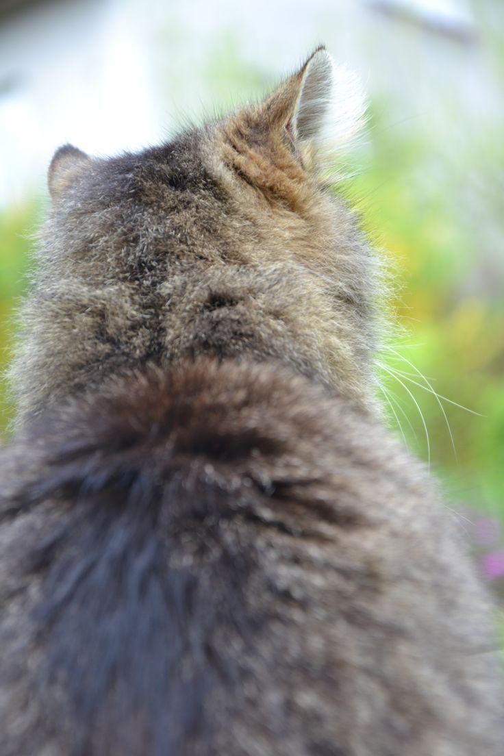 **..Cat view..** #cat