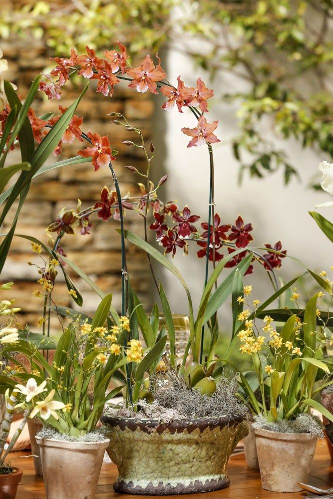 Orquídeas nas cores: amarelo, vinho e laranja para uma mesa montada no jardim e arranjos em tons outonais!