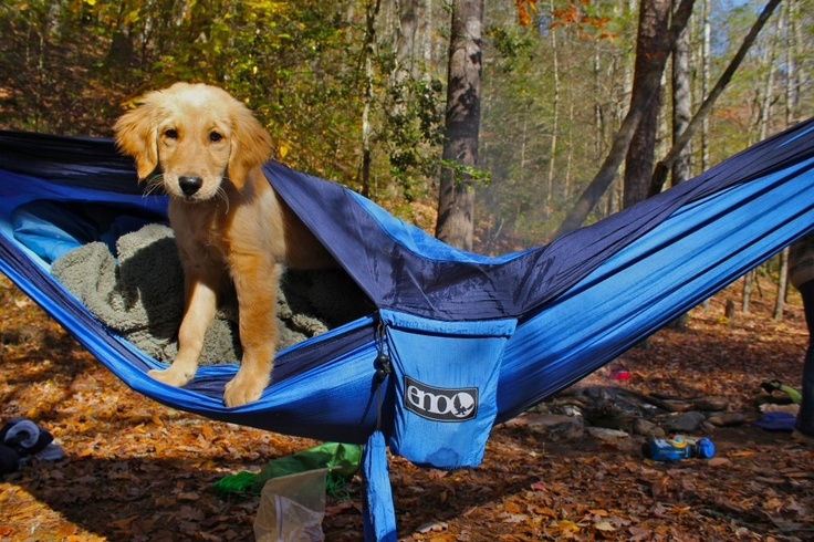 this sleeping bag/hammock is the coolest thing ever..!Favorite Things, Animal Crackers, Adventure Puppies, Camping, Outdoor, Camps, Hammocks Adventure, Coolest Things, Dogs Life