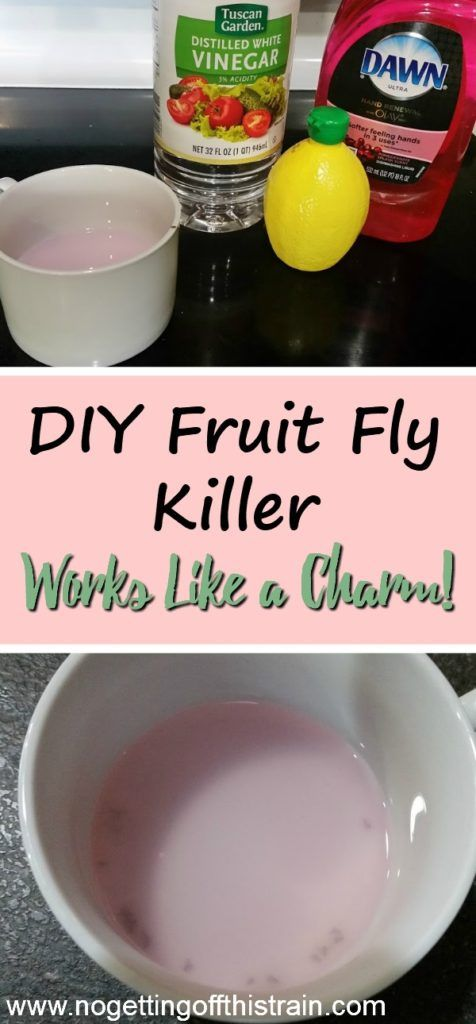 Are those pesky fruit flies making their way into your house this Summer? Try this DIY fruit fly killer to help get rid of them in hours!