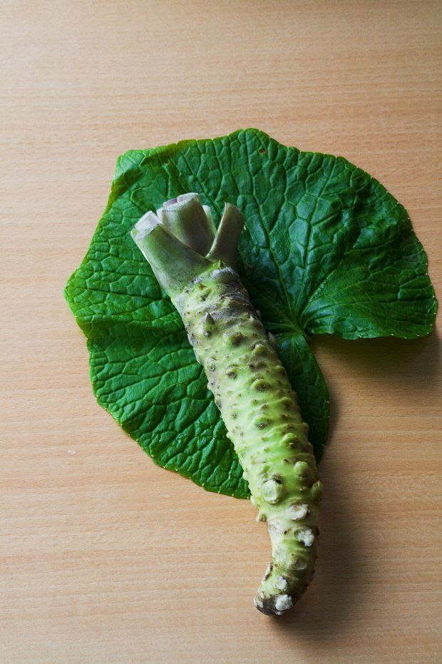 Putting wasabi on your head is being touted as the next big hair-loss remedy