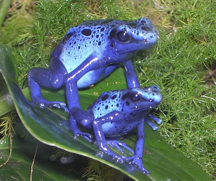 Amazing Frog: 37 Best School Projects Images On Pinterest