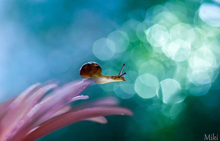 Japanese photographer Miki Asai is an incredibly talented macro photographer who accompanies ants as they explore a miniature world of stones, flowers and water – mostly within her own garden.