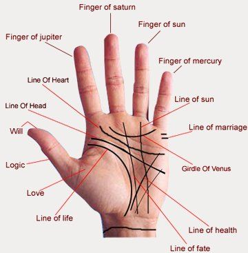 Palmistry, or chiromancy is the claim of characterization and foretelling the future through the study of the palm, also known as palm reading or chirology.