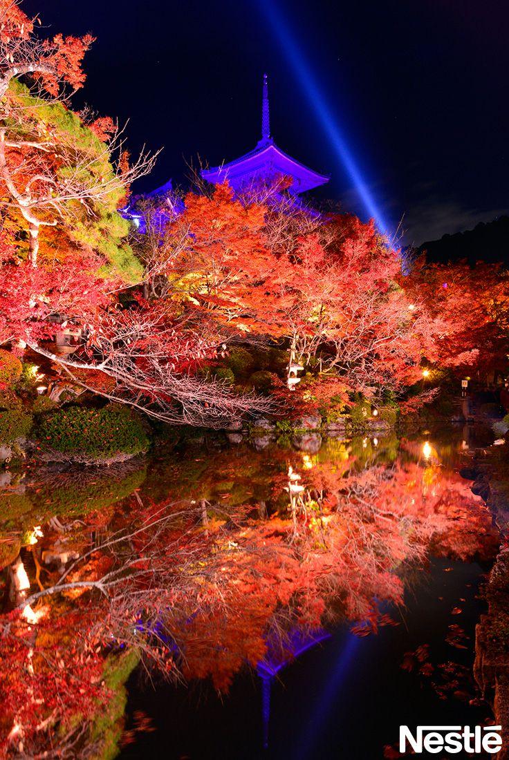 画像F:紅葉とライトアップ♪神秘的です。