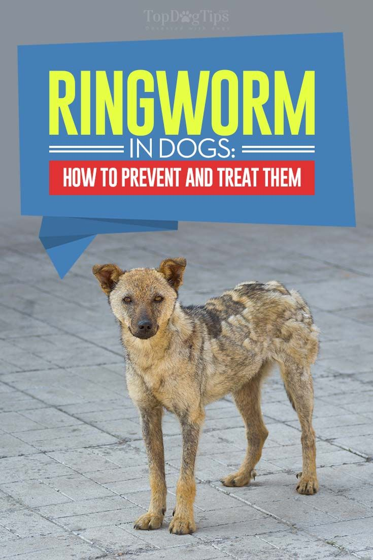 Natural Dog Ringworm Remedies Dog Ringworm Ringworm Remedies